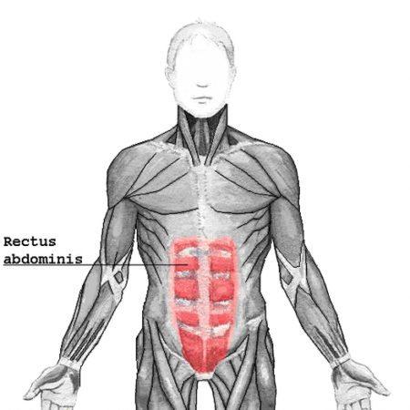 Recto-abdominal