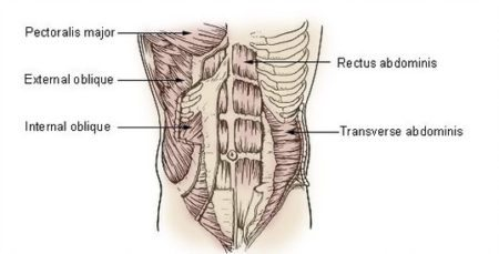Trasverso-abdominal