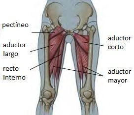 Aductores de cadera