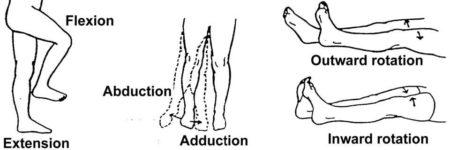 movimientos cadera