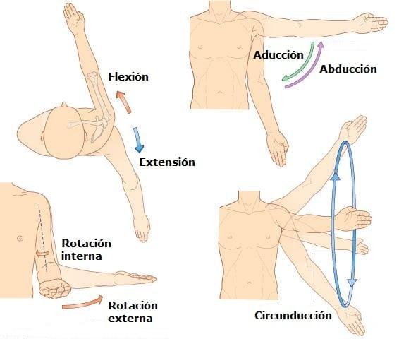 movimientos del hombro