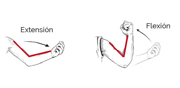 flexion y extension