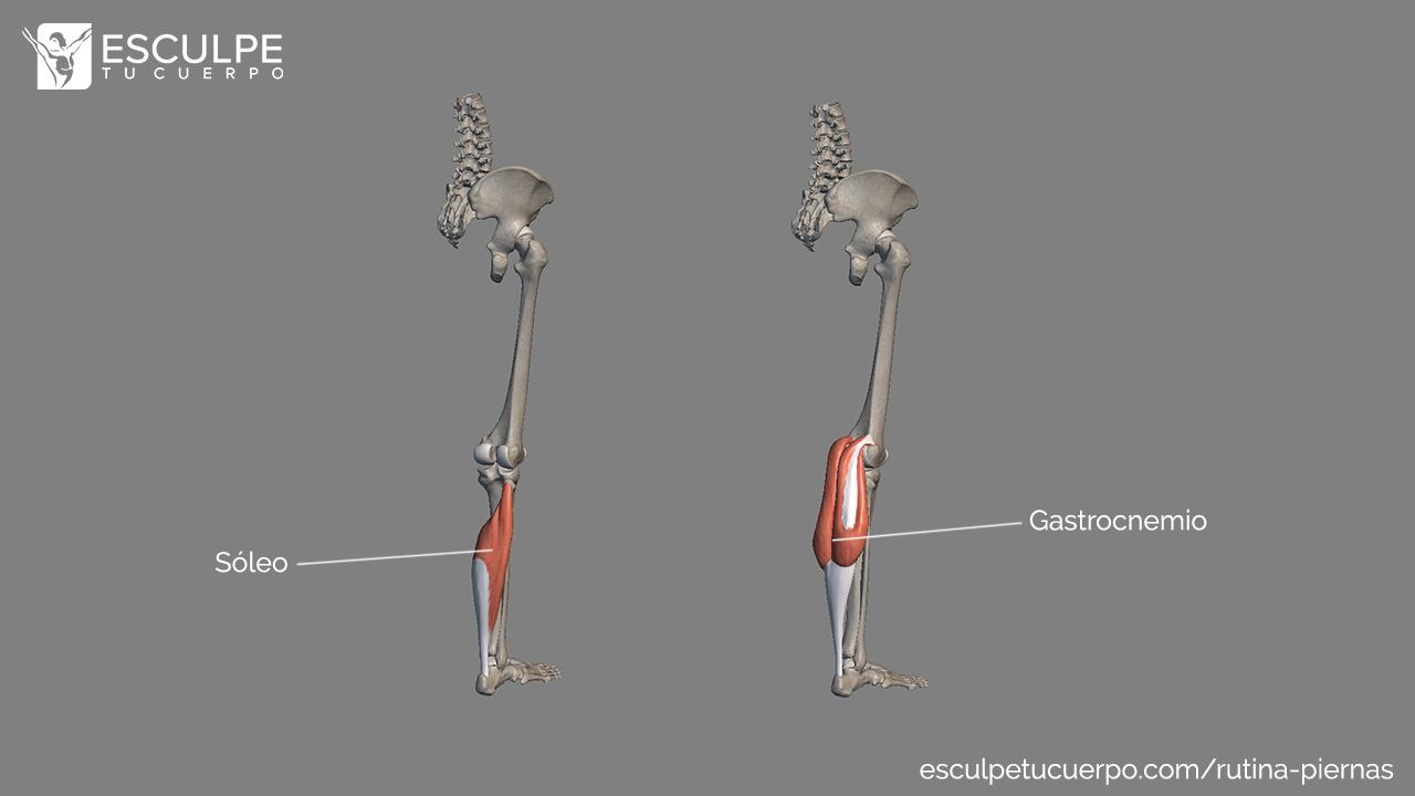 Anatomia pantorrillas