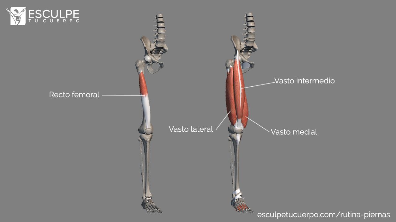 anatomia cuadriceps