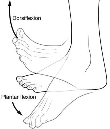 flexion-plantar-y-dorsiflexion
