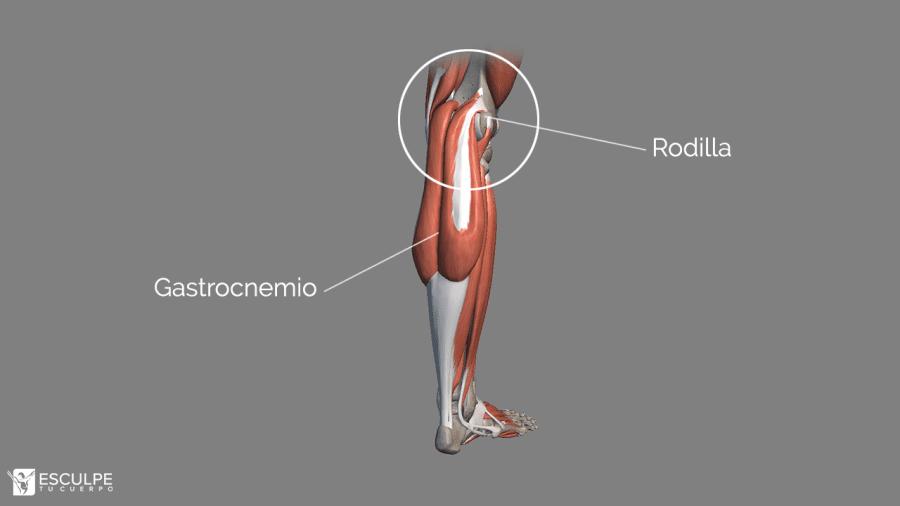 gastrocnemio biarticular
